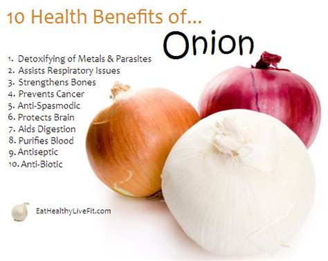 onion medicinal herb info pinterest the world s catalog of ideas