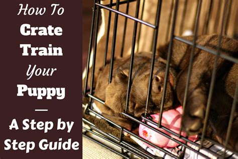 crate a puppy how to crate a puppy day even if you work