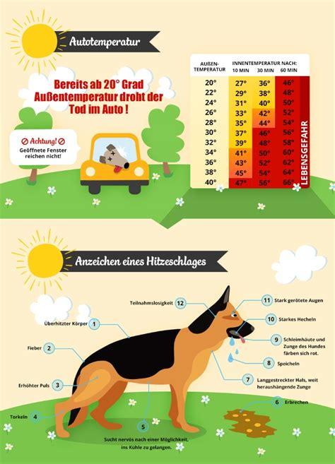 Hund Im Auto Hitze by Hunde Hitze Wufflog