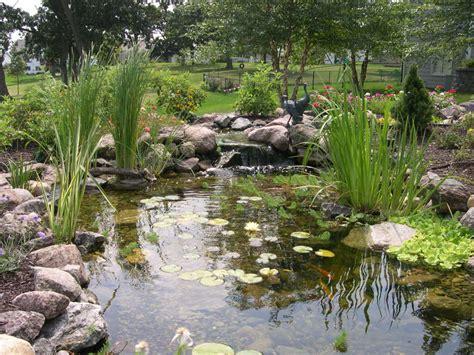 Is A Backyard Pond An Ecosystem by 191 Pensando En Construir Un Estanque Descubre Todas Sus