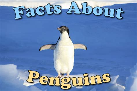 penguin facts for exciting facts about penguins facts about animals volume 18 books facts about penguins the fab mag