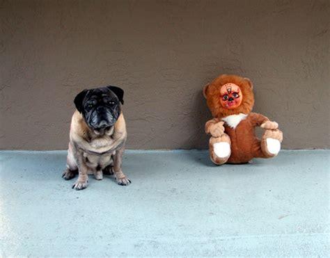 human pug pug and human doll zoomar flickr
