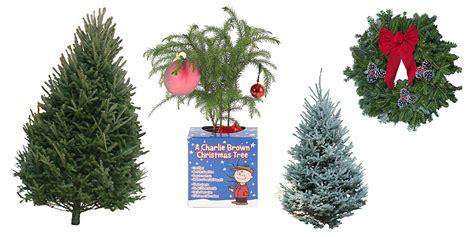 buy   christmas tree   sofa   amazon