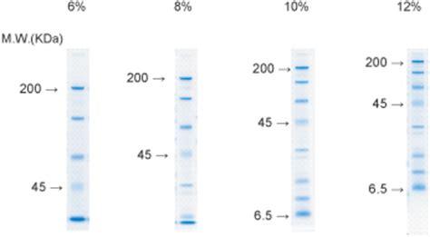 Mba Crosslinker Percentages In Acrylamide Gel by Wide Range Gel Preparation Buffer 4x For Page Nacalai