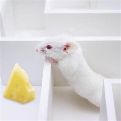 Mäuse Unter Der Decke by Pixwords Das Bild Mit Maus M 195 164 Use K 195 164 Se Labyrinth Juan