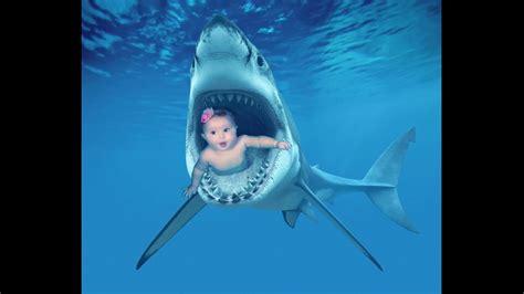baby shark real life shark eats baby real or fake youtube