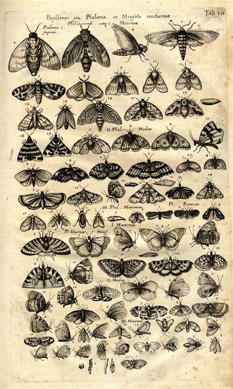 papillon tattoo best 25 papillons ideas on beautiful