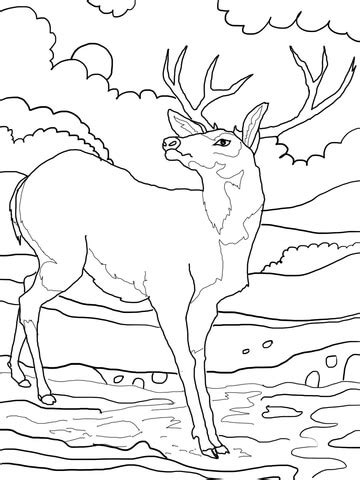 coloring pages of mule deer black tailed mule deer coloring page supercoloring com
