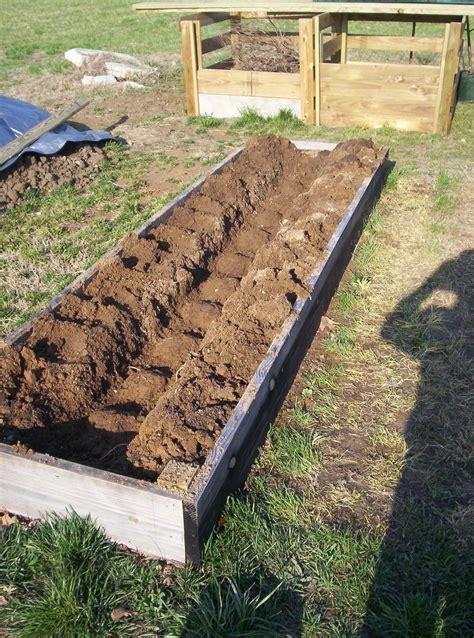 asparagus bed asparagus bed