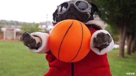pug basketball demi lovato fall out boy release with basketball pug