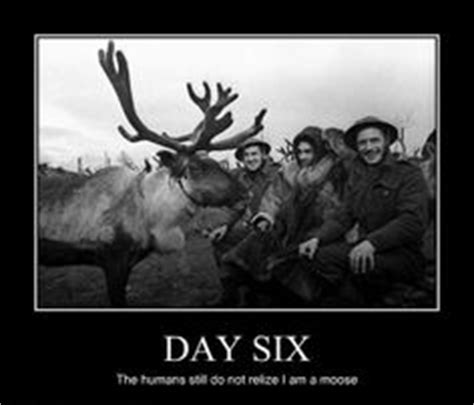 1000 images about moose memes on pinterest funny moose moose and roosevelt