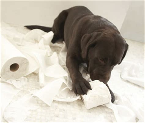 when do puppies stop chewing everything when will my puppy stop chewing everything stop barking dogs reviews what do you