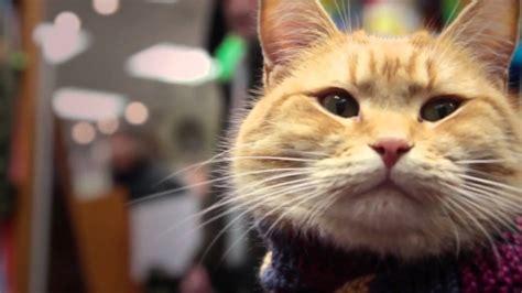 Cat 1 Named by Cat Named Bob
