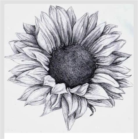 55 Latest Realistic Sunflower Tattoos Black And White Sunflower Shoulder