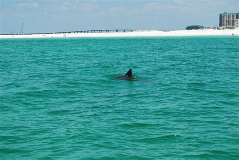 glass bottom boat tours in destin florida glass bottom boat dolphin cruise picture of boogies
