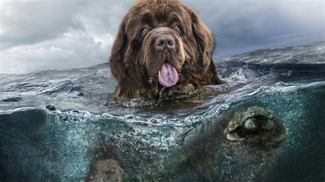 wallpaper dog water  animals