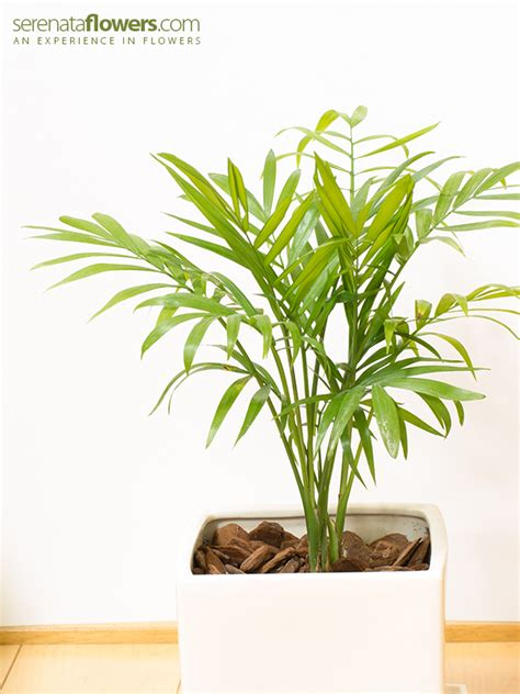 7 low light plants for any room in the house 7 low light plants for any room in the house