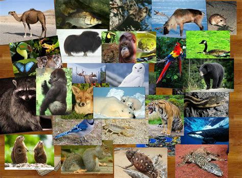 Search All The World All Animals In The World Pictures Www Pixshark
