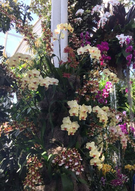 Orchid Show Botanical Gardens 25 Best Orchid Show Ideas On Orchid Show 2016 The Orchid And Blanc