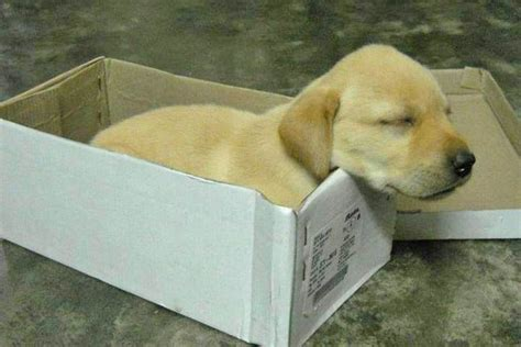 order a puppy did you order a size of puppy