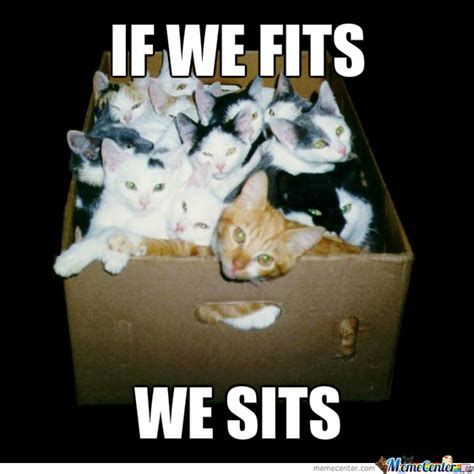 meme box cats in a box by funnyjokelover meme center