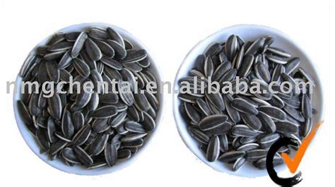 sunflower seeds american type 5009 for human consumption
