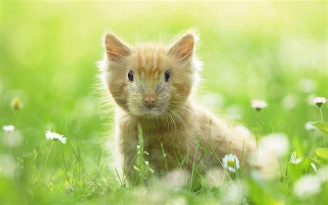 cabbit images cabbit images images hd