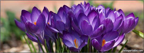 imagenes de flores bonitas para facebook imagenes de flores hermosas para portada de facebook imagui