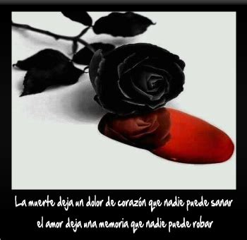 imagenes de rosas negras con sangre im 225 genes de rosas negras con sangre y frases de pena y