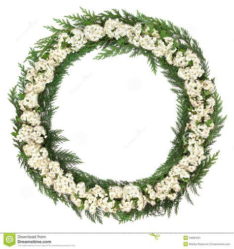 hawthorn blossom wreath stock image image 34997591
