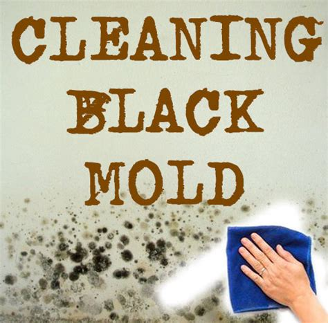 cleaning black mold in bathroom cleaning bathroom mold black mold
