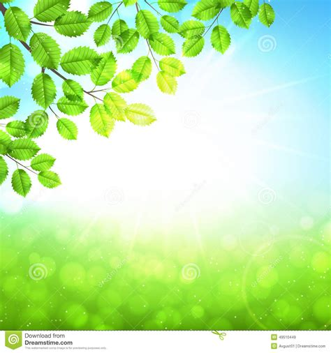 Wedding Nature Background Images by Abstract Nature Background With Leaves And Sun Stock