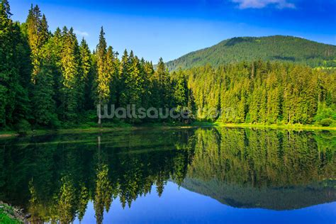 wall murals nature nature s green and blue wall mural nature s green and