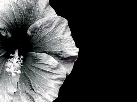 flower wallpaper grey gray and white flower wallpaper 15 desktop background