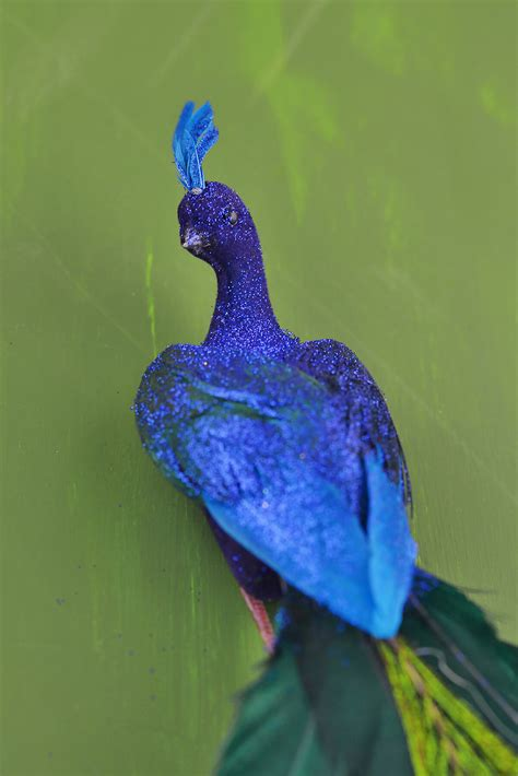 peacock blue blue peacock images www pixshark com images galleries