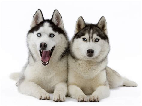 sweet dogs and sweet dogs wallpaper
