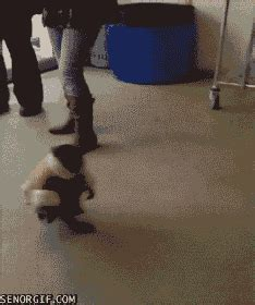 ikea gif ikea monkey just walking around gif on imgur