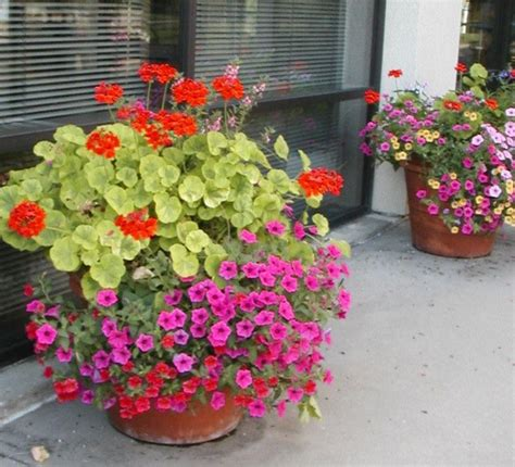 Pot Sepeda 6 By Sun Florist 207 best images about outdoor flower pots on