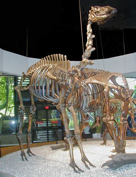 camelops wikipedia