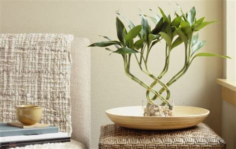 plants good for bathroom top 10 good plants for bathroom that will change your life