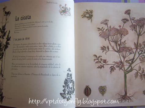 el herbario de las 8426381820 foto rese 241 a el herbario de las hadas de sebastien perez