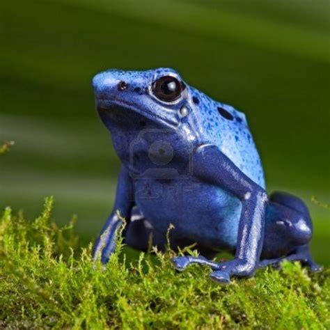 amazon rainforest animals the 25 best poisonous animals ideas on pinterest pet