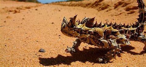 imagenes animales que viven en el desierto animales del desierto nombres fotos cu 225 les son y qu 233