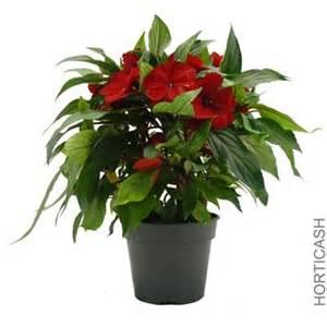 plantes d 180 int 233 rieur fleuries
