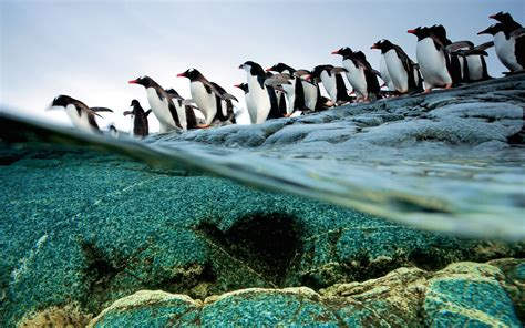 wallpaper mac national geographic national geographic 171 awesome wallpapers