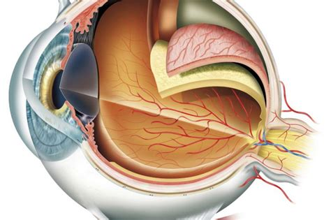imagenes de ojos por dentro 191 c 243 mo funciona el ojo humano batanga