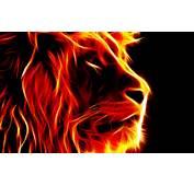 Lion Fire HD Wallpaper  Only Hd Wallpapers