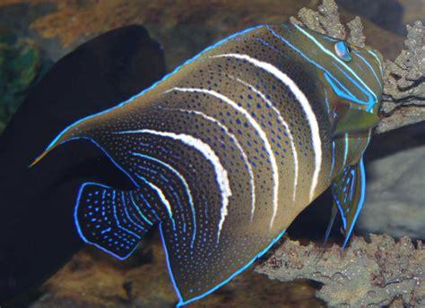kapstadt info waterfront aquarium fische