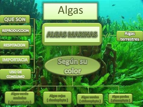 imagenes de algas verdes y azules algas