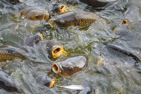 pa fish and boat fines game fish and boat commissions await authority to set
